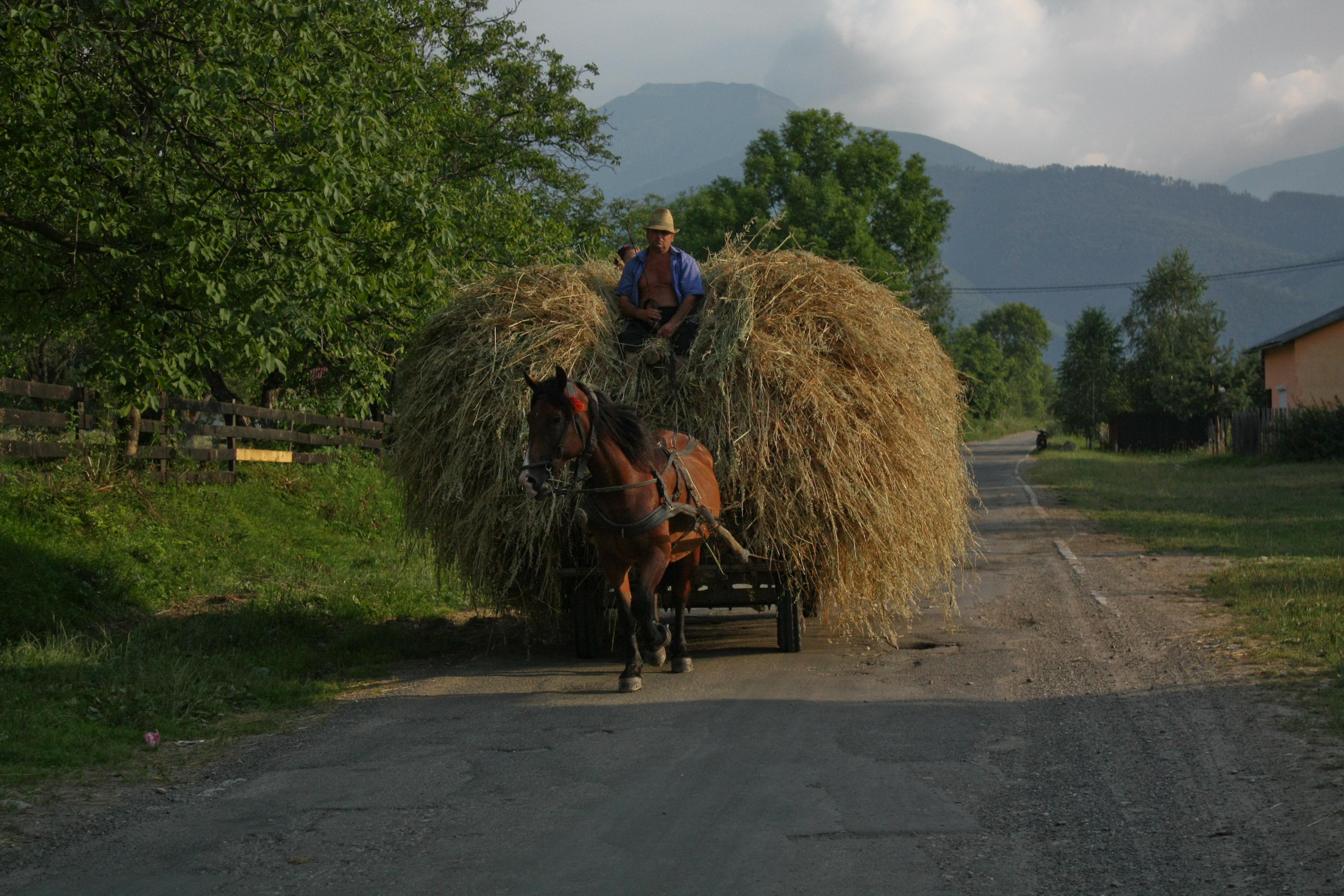 Kleinbauer aus Dejani, Rumänien